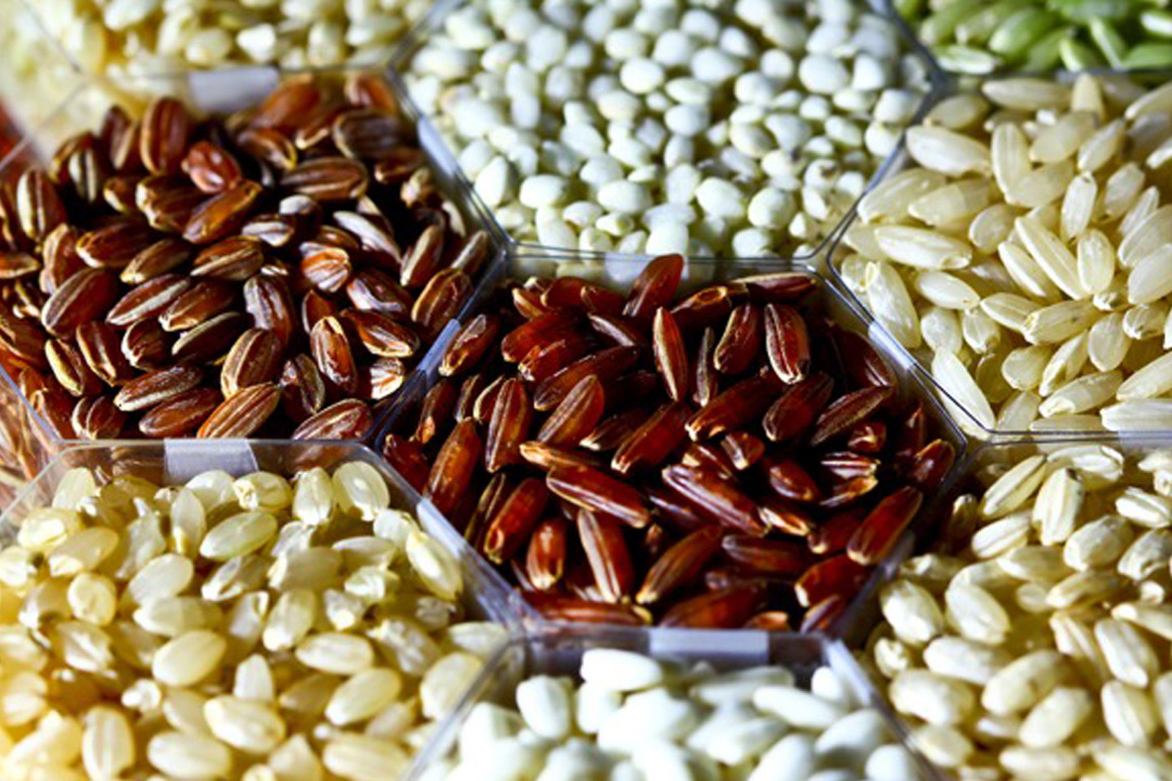 Exploring the Future of Food: Rethinking Ancient Grains