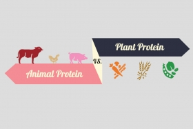 Infographic: Plant vs. Animal Protein