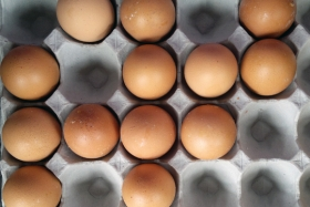 Savvy Consumer: Deciphering Egg Labels
