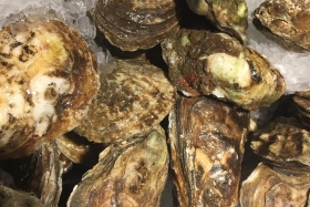 Oyster Crabs: Weird or Lucky?
